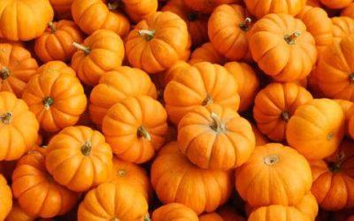 Grow Mini Pumpkins For Hayhurst